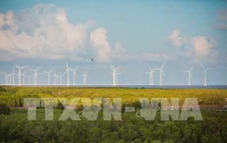 Bac Lieu travaille avec des investisseurs dans l'energie eolienne hinh anh 1