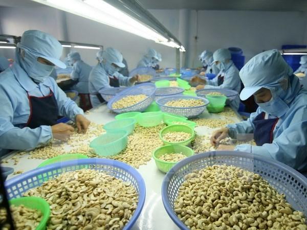 Le Vietnam projette d'exporter 3,3 milliards de dollars de noix de cajou en 2017 hinh anh 1