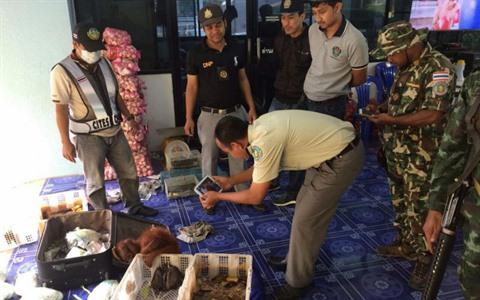 Thailande : bebes orangs-outans et tortues sauves de la contrebande hinh anh 1