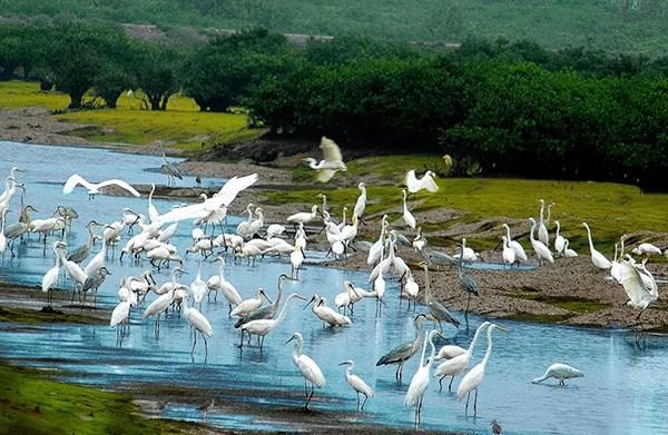 Pour bien preserver les zones ornithologiques importantes au Vietnam hinh anh 1