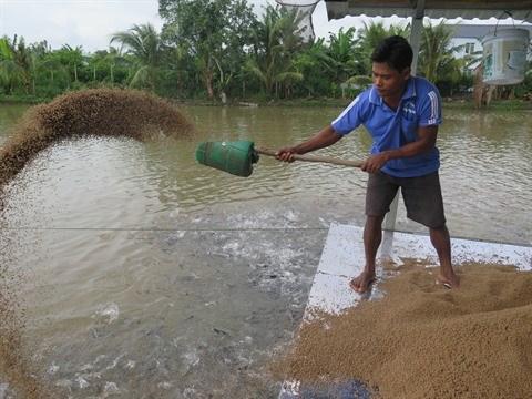 La filiere pangasius doit s'orienter vers le developpement durable hinh anh 1