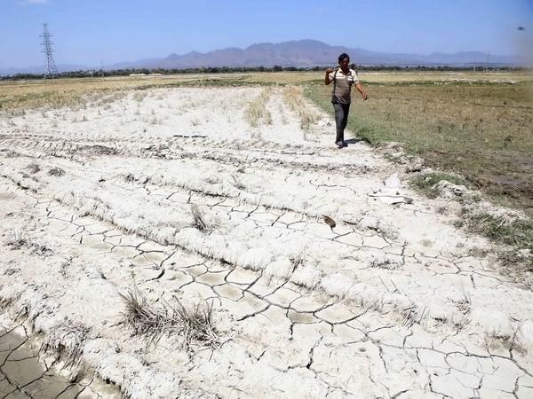 Seminaire sur des solutions au changement climatique dans le delta du Mekong hinh anh 1