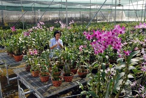 Le Vietnam mise sur le developpement du marche des sciences et technologies hinh anh 1