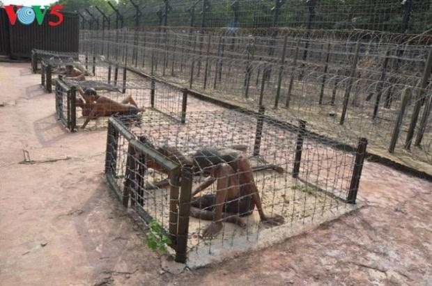 La prison de Phu Quoc, symbole des revolutionnaires indomptables hinh anh 1
