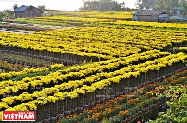 Une region florale du Sud hinh anh 1