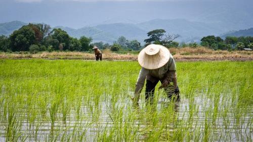 Thailande : de nouvelles initiatives pour assister les agriculteurs hinh anh 1