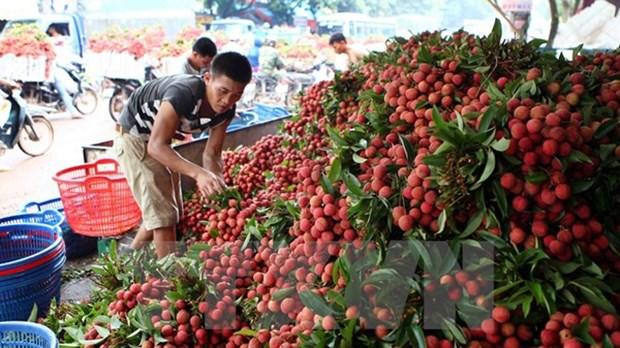 Les fruits frais en tete des exportations vietnamiennes vers le marche chinois hinh anh 1