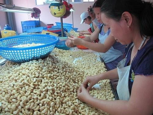 Exportation de plus de 188.000 tonnes de noix de cajou en 7 mois hinh anh 1