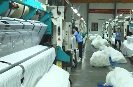 Le Vietnam, 1er importateur de coton americain hinh anh 1