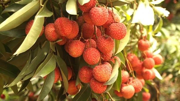 Aide australienne dans l'amelioration de la qualite et de la valeur des fruits et legumes hinh anh 1