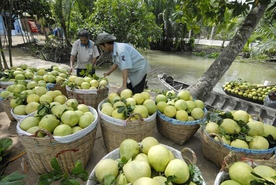 Lancement d'un projet de transformation de fruits et legumes a Gia Lai hinh anh 1