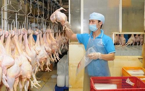 Le poulet vietnamien exporte au Japon hinh anh 1