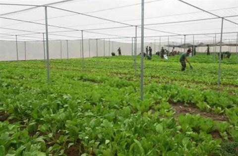 La production de semences, une priorite pour la megalopole du Sud hinh anh 2