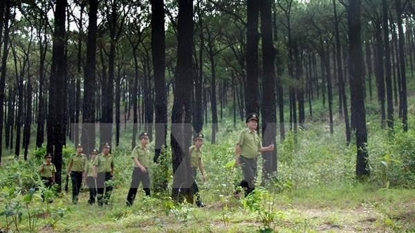 Pour proteger les forets, Thua Thien-Hue et l'USAID cooperent dans le projet Truong Son Xanh hinh anh 1