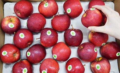 Les Vietnamiens friands de pommes francaises hinh anh 1