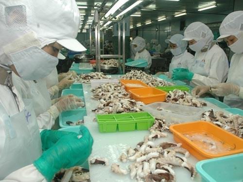 Cephalopodes: bond des exportations vietnamiennes au Japon hinh anh 1