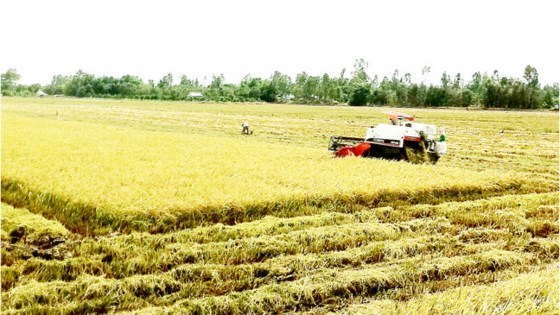 Le Vietnam applique la teledetection dans la production agricole hinh anh 1