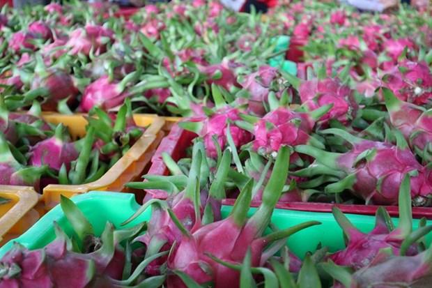 Pres de 2 milliards de dollars d'exportations de fruits et legumes en Chine hinh anh 1