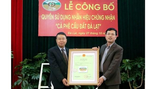 Da Lat : Enregistrement de la marque de certification pour le cafe arabica du village de Cau Dat hinh anh 1