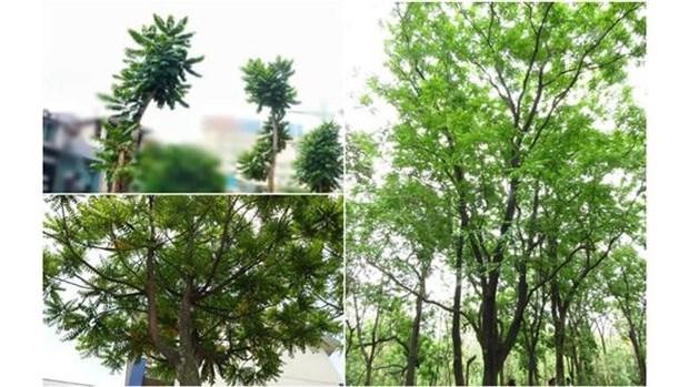 Hanoi: plantation d'arbre a l'occasion de la Fete nationale finlandaise hinh anh 1