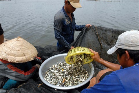 Les crues, un don de la nature pour le delta du Mekong hinh anh 1