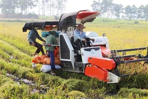 Ninh Binh encourage la production agricole propre hinh anh 1