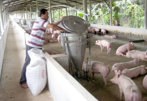 Dynamiser les exportations nationales de viande porcine hinh anh 2