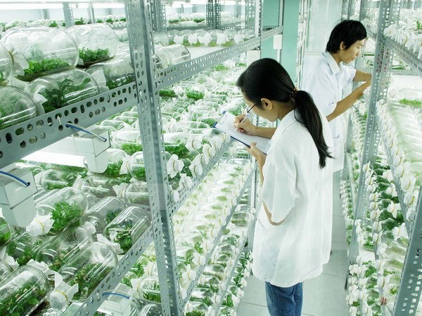 Hautes technologies – tendance ineluctable de l'agriculture moderne hinh anh 1