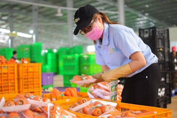 Hautes technologies – tendance ineluctable de l'agriculture moderne hinh anh 4