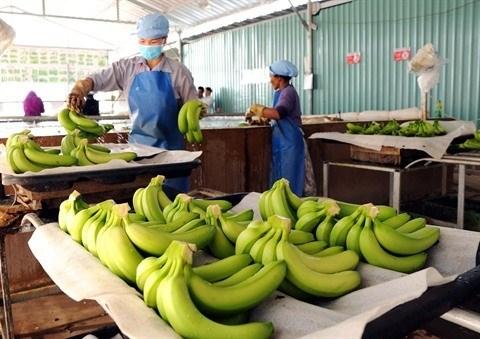 2,84 milliards de dollars d'exportations pour les fruits et legumes en dix mois hinh anh 1