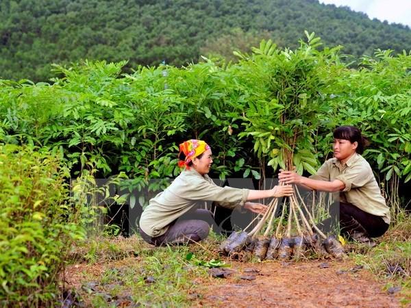 De bons acquis dans la strategie de developpement du secteur sylvicole du Vietnam hinh anh 1