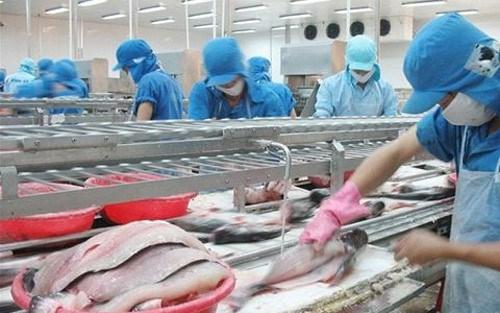 Forte croissance des exportations de pangasius en Chine hinh anh 1