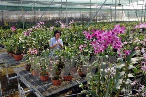 Eveiller les potentiels de l'agriculture high-tech hinh anh 1