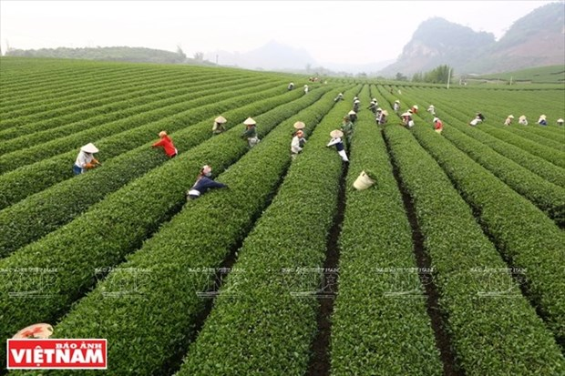 Eveiller les potentiels de l'agriculture high-tech hinh anh 2