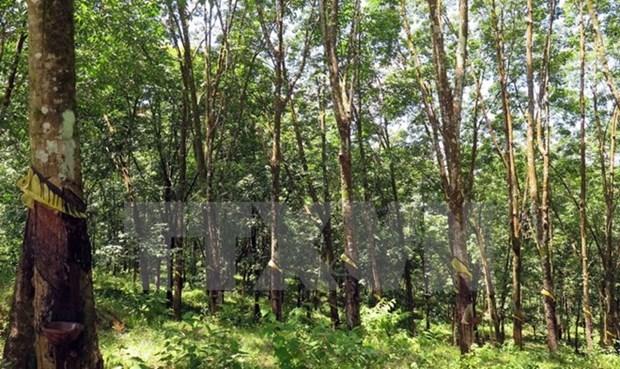 Des progres dans le developpement forestier hinh anh 1