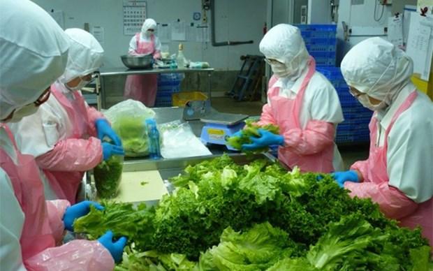 Elever la capacite logistique pour le developpement du secteur des fruits et legumes hinh anh 1