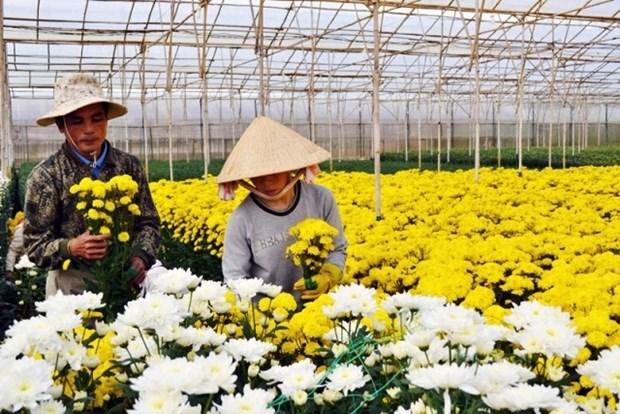 Un nouveau village traditionnel de la floriculture a Da Lat hinh anh 1