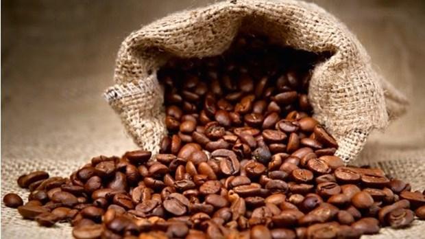 Importation de cafe vietnamien : l'Allemagne conserve son trone hinh anh 1