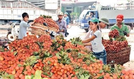 Lier la production agricole pour gagner des parts de marche hinh anh 1