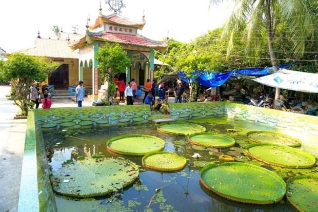 La pagode abritant une sorte de lotus geant dans le delta du Mekong hinh anh 1