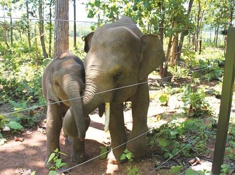 L'histoire de deux elephanteaux orphelins hinh anh 1