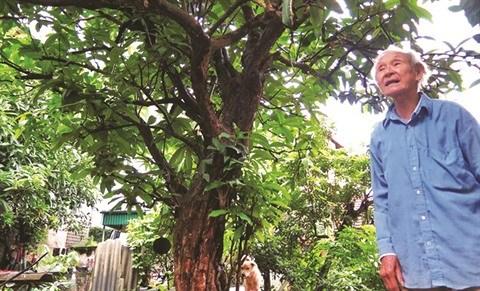 Le dernier jardin medicinal de Dai Yen hinh anh 1