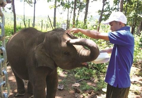 L'histoire de deux elephanteaux orphelins hinh anh 2