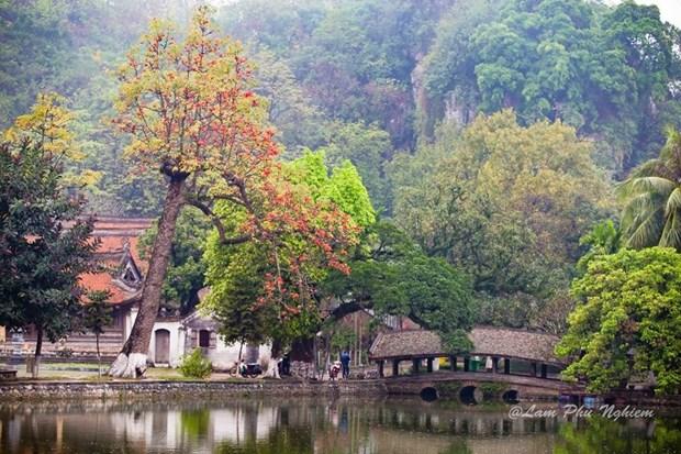Le kapokier, la beaute culturelle de la campagne du Nord Vietnam hinh anh 2