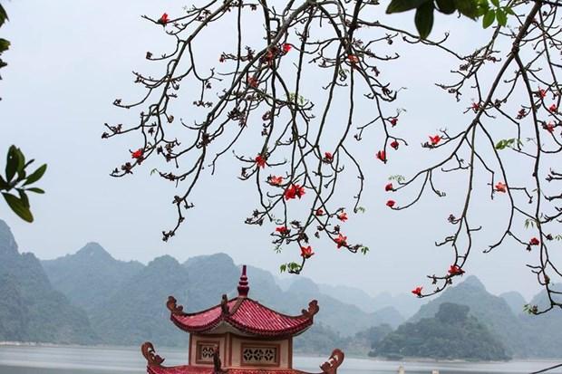 Le kapokier, la beaute culturelle de la campagne du Nord Vietnam hinh anh 4