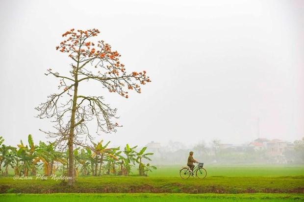 Le kapokier, la beaute culturelle de la campagne du Nord Vietnam hinh anh 5