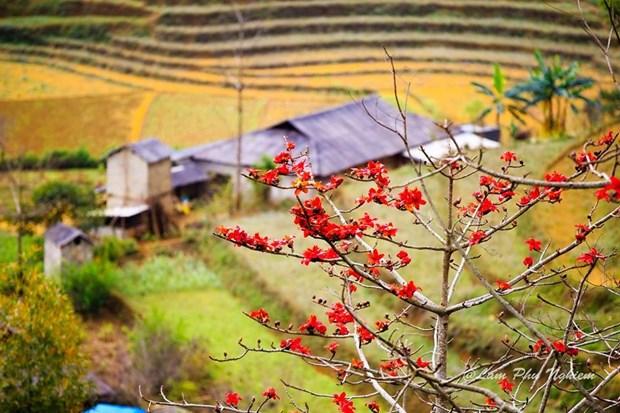Le kapokier, la beaute culturelle de la campagne du Nord Vietnam hinh anh 8