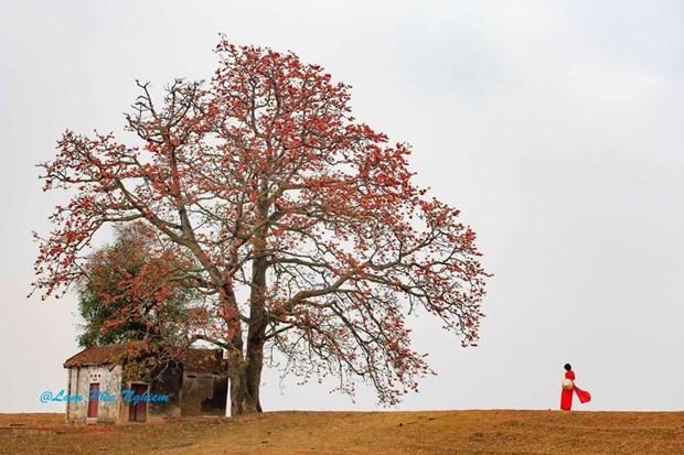 Le kapokier, la beaute culturelle de la campagne du Nord Vietnam hinh anh 9