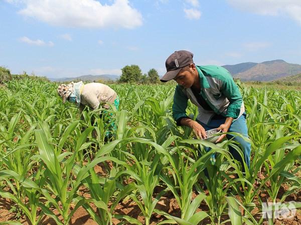 1.630 milliards de dongs pour le developpement de la production dans les communes demunies hinh anh 1