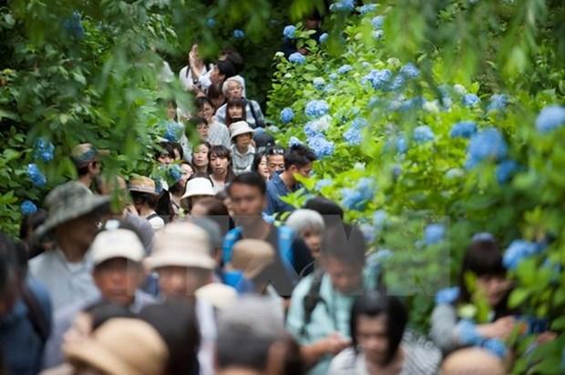 Hausse spectaculaire du nombre de touristes vietnamiens au Japon en dix ans hinh anh 1